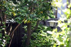 玄関脇から庭を望めます。(2013-05-26,周辺環境,ENTRANCE,1F)