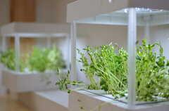 水耕栽培マシン。豆苗を育てているそう。流水もLEDライトも、自動制御されています。(2012-12-24,共用部,OTHER,3F)