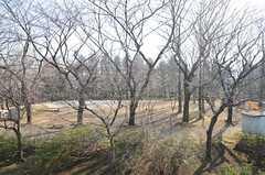 窓から見た外の景色。建物のとなりは公園です。(202号室)(2016-03-03,専有部,ROOM,2F)