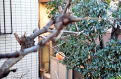 窓からは柿の木が見えます。(2015-12-08,専有部,ROOM,2F)