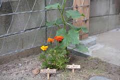 植えられている植物には手書きのプレートが付けられています。(2017-06-12,共用部,OUTLOOK,1F)