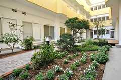 中庭の様子。管理人さんが手入れをしています。(2009-10-15,共用部,OTHER,1F)