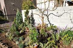 緑の多い庭があります。(2012-11-16,共用部,OTHER,1F)