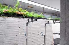 ラウンジ横の庭でも洗濯物を干すことができます。(2010-06-09,共用部,OTHER,1F)