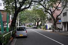 シェアハウスの目の前には桜並木が続いてます。(2010-10-18,共用部,GARAGE,1F)