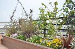 植物はオーナーさんが手入れをするとのこと。(2013-05-10,共用部,OTHER,3F)