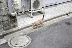 猫発見。(2009-07-03,共用部,ENVIRONMENT,1F)