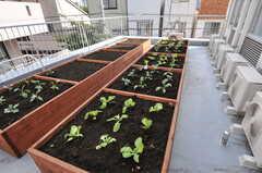 畑があります。自由に使えるので、育てたい野菜などがあれば面白そう。(2012-09-24,共用部,OTHER,2F)