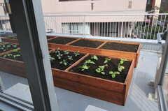 窓からグリーンを楽しめます。(211号室)(2012-09-24,専有部,ROOM,2F)