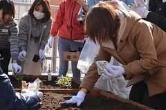 ベランダ菜園で行われた野菜の種まきイベントの様子4。(2013-02-23,共用部,PARTY,2F)