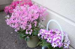塀の前には花が飾られています。(2014-03-12,共用部,OTHER,1F)