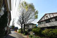 周辺は住宅街。近所には大きな保存樹があります。(2017-04-17,共用部,GARAGE,1F)