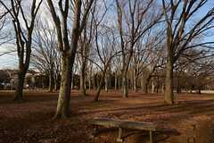 小金井公園の並木。(小金井公園)(2014-03-05,共用部,ENVIRONMENT,1F)
