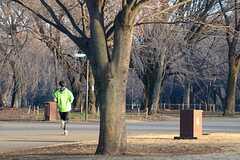 公園はジョギングにもぴったり。(小金井公園)(2014-03-05,共用部,ENVIRONMENT,1F)