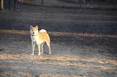ドッグランもあります。(小金井公園)(2014-03-05,共用部,ENVIRONMENT,1F)