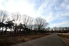 小金井公園の様子2。(小金井公園)(2014-03-05,共用部,ENVIRONMENT,1F)
