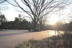 スケーターにはうれしい滑らかなコンクリート敷きの広場もあります。(小金井公園)(2014-03-05,共用部,ENVIRONMENT,1F)