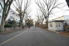 東京学芸大学の並木道。(2017-01-19,共用部,ENVIRONMENT,1F)