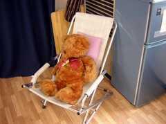 シェアハウスのラウンジ4。寛ぎすぎのぬいぐるみ。(2008-02-08,共用部,OTHER,1F)