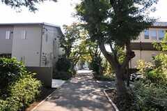 シェアハウス周辺の並木道。(2013-11-05,共用部,ENVIRONMENT,1F)