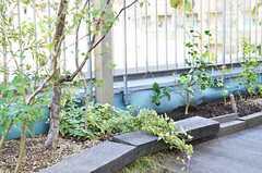 花壇の様子。(2013-09-12,共用部,OTHER,4F)