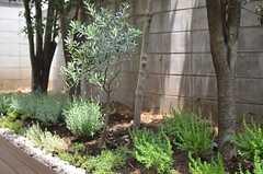 菜園にはハーブが育っています。(2013-05-27,共用部,OTHER,1F)