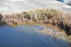 池の様子。今のところ何も住んでいないようです。(2013-03-15,共用部,OTHER,5F)