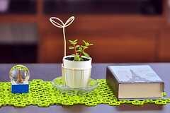 テーブルに置かれた、植物やメモ帳。(2012-02-09,共用部,LIVINGROOM,2F)