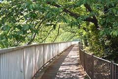 シェアハウスの裏手は桜の木が並ぶ遊歩道。春は桜のトンネルのようになるそうです。(2017-05-19,共用部,ENVIRONMENT,1F)
