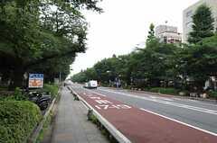 国立駅前から続く並木道。(2013-07-05,共用部,ENVIRONMENT,1F)