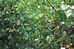 ベランダから庭の梅の木が見えます。(205号室)(2014-06-25,専有部,ROOM,2F)