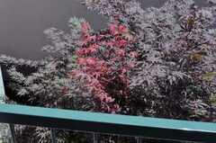 窓の外には紅葉。(202号室)(2010-06-17,共用部,OTHER,2F)