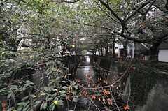 シェアハウスへ向かう途中の目黒川。(2013-08-22,共用部,ENVIRONMENT,1F)