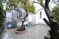 自転車置場の様子。くねくねと曲がった木が植えられています。(2013-10-15,共用部,GARAGE,1F)