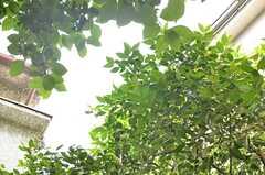 緑がいっぱい。周りは住宅地で静かな場所です。(2014-05-12,共用部,OTHER,1F)