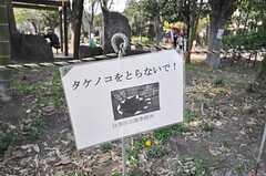 タケノコをとらないで!(2009-04-08,共用部,ENVIRONMENT,1F)