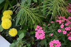 花壇には季節の花が咲いています。(2014-05-28,専有部,ROOM,1F)