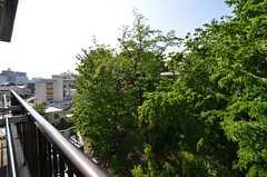 ベランダからの眺めはこんな感じ。神社の緑が視界いっぱいに広がります。(2014-05-01,共用部,OTHER,7F)