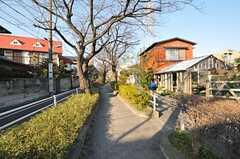 近くには桜並木があります。  (2013-02-28,共用部,ENVIRONMENT,1F)