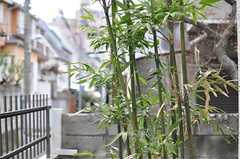 玄関脇には竹が生えています。(2012-04-03,共用部,OTHER,1F)