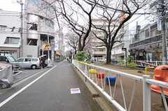 東急東横線・都立大学駅からシェアハウスへ向かう道の様子。桜並木です。(2012-04-03,共用部,ENVIRONMENT,1F)