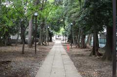 シェアハウスの近くの神社。(2013-10-24,共用部,ENVIRONMENT,1F)