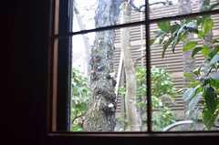 窓からは桜が。(104号室)(2014-03-14,専有部,ROOM,1F)