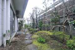 庭の様子2。(2014-03-14,共用部,OTHER,1F)