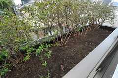 空いているスペースに植物を育てることができます。(202号室)(2014-03-14,専有部,ROOM,2F)