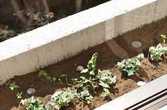 窓の外には植物が育てられます。(203号室)(2014-03-14,専有部,ROOM,2F)