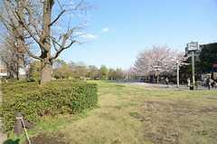 パーシモンホールの前に広がる芝生。(2014-04-04,共用部,ENVIRONMENT,1F)