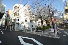 駅の裏にある区営の駐輪場。桜並木が続いています。(2014-04-04,共用部,ENVIRONMENT,1F)