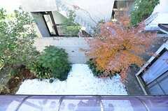 窓から見た庭の様子。(203号室)(2014-12-15,専有部,ROOM,2F)