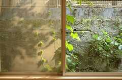 窓の外はつたの絡まる塀。(102号室)(2012-09-13,専有部,ROOM,1F)